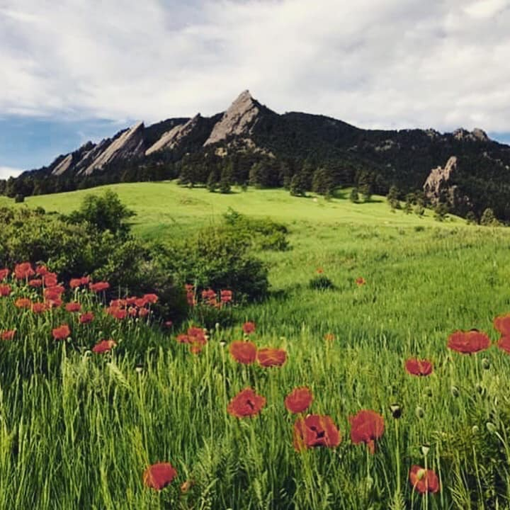 Wildflowers and Flatirons